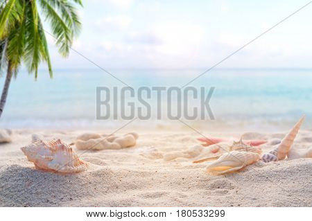 Seaside summer beach with starfish shells coral on sandbar and blur sea background. Concept of summertime on beach. vintage color tone.