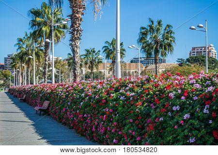 Flowers bridge (Puente de las flores) a modern bridge with a plenty of flower pots full of flowers on both sides of it Valencia Spain.