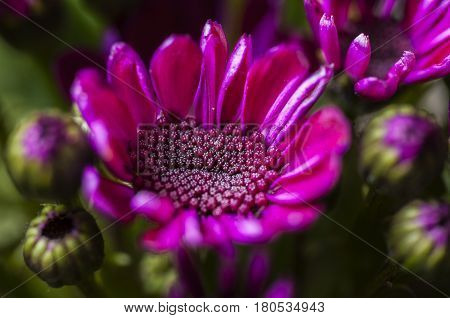 Beautifu big onel pink flower in the nature