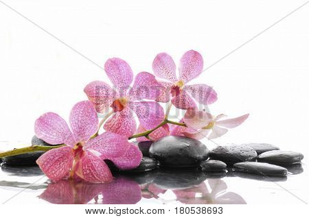 Still life with pink orchid with stones