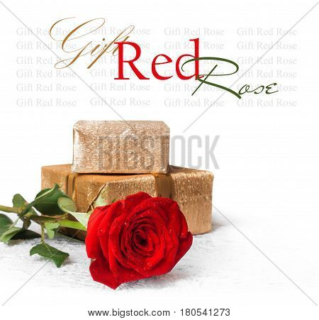 Red rose with green leaves and water drops with gift isolated on white background