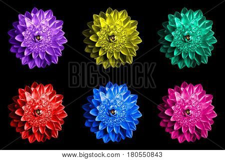 Pack Of Colored Surrealistic Fantasy Flowers Macro Isolated On Black