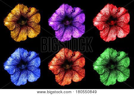 Pack Of Colored Surreal Dark Chrome Althea Flowers Macro Isolated On Black