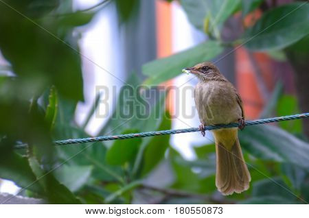 bird on rope with tree branch and blurred background soft focus selective focus.