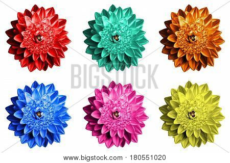 Pack Of Colored Surrealistic Fantasy Flowers Macro Isolated On White