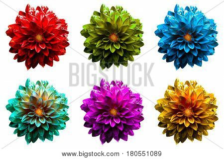 Pack Of Colored Surreal Wet Dahila Flowers Macro Isolated On White