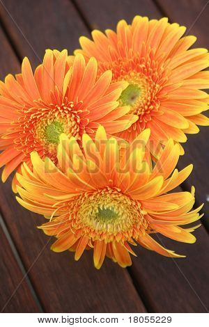 An arrangement of three fresh orange gerbera ( flowers )