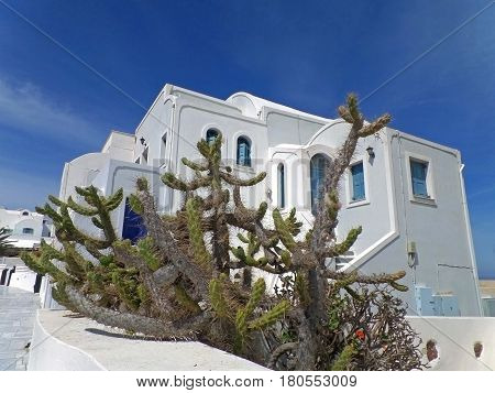 Cactus plants against white Greek Islands style architecture under blue sky, Santorini Island of Greece