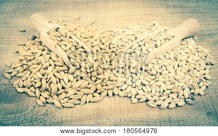 Barley Grain Or Seeds And Pearl Barley.