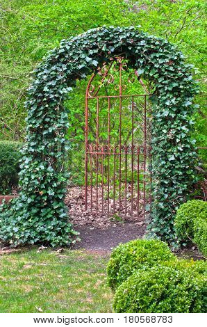 Wrought Iron Gate covered in ivy in English Garden