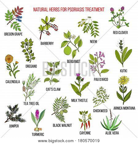 Best natural herbs for psoriasis treatment. Hand drawn vector set of medicinal plants