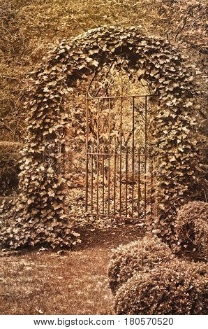 Wrought Iron Gate covered in ivy with sepia tone effect