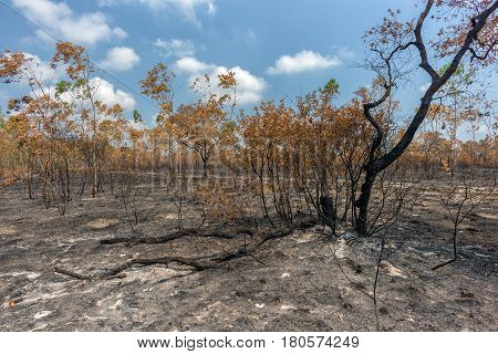 Rainforest cut and burned to plant crops