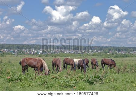 Horses Grazing On A Green Meadow