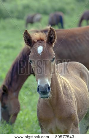 The Gaze Of A Young Colt