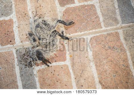 The dead bird on the floor in the garden. Ecology concept