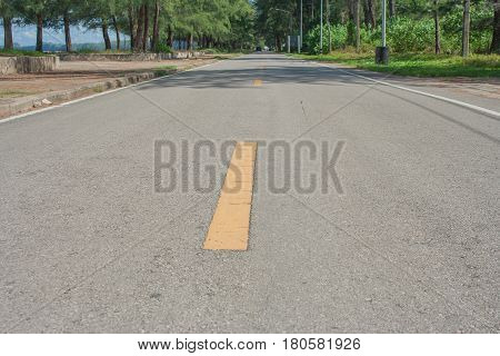 Yellow line on the road with green tree on side of road.