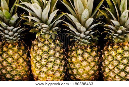 close up of pineapples in a row