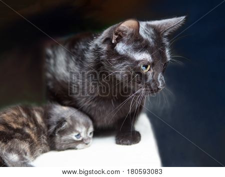 A black cat with kitten, on a black background.