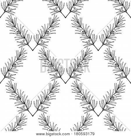 Rooibos tea plant leaf flower. Seamless pattern. Hand drawn ink sketch illustration lineart. African rooibos tea hot drink. Herbal tea. Isolated on white background.