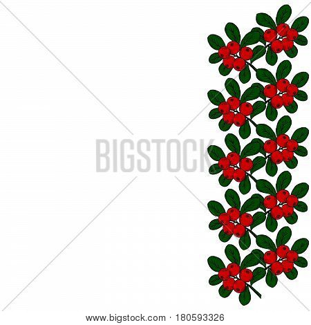 cranberry (cowberry) branches frame border isolated on white background with place for text.