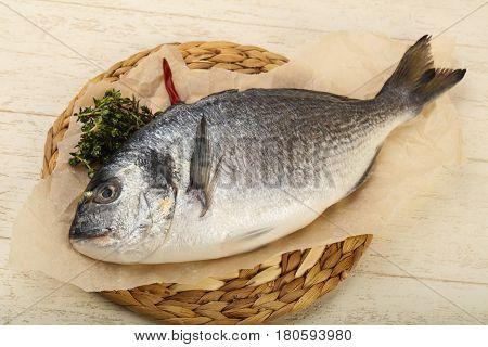 Raw Dorada Fish
