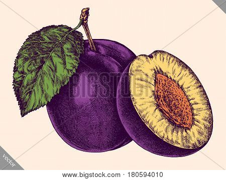 Engrave plum hand drawn graphic vector illustration art
