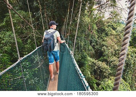 Tourist on the elevated walkway through the treetops in rainforest - Borneo Malaysia