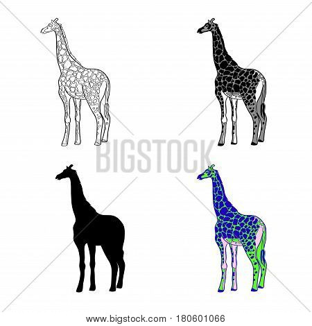 Vector illustration of an image of a giraffe. Black and white line black silhouette black and white and gray spot. Multicolored illustration.