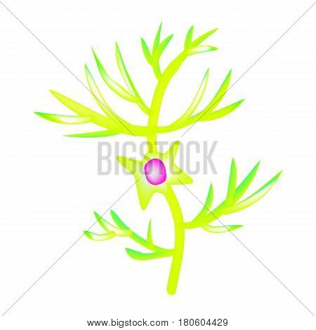 The structure of the pyromidal neuron. Nerve cell. Infographics. Vector illustration on isolated background.