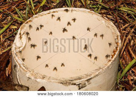 Moth Flies in a drain pipe in Florida.