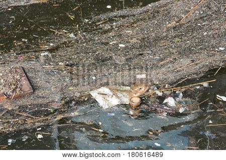 Pollution and rubbish floating on water in Dutch harbor