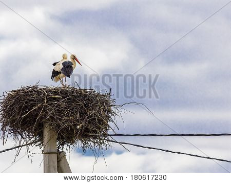 Family Of Storks Made A Nest On A Telegraph Pole In The Village