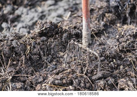 Old Steel Pitchforks In A Pile Of Manure , Fertilize Fields