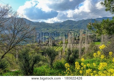 Troodos mountain , a view of the valley on the way up.   Taken in spring on a bright sunny day.