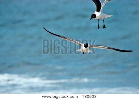 two seagulls near the ocean beach poster