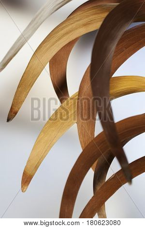 Macro composition of dry curled acacia leaves