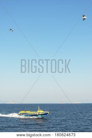 speedboat on the blue sea and seagull