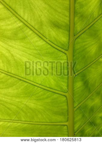Green Leaf Natural Background. Fresh Summer Or Spring Pattern. Backlight Greenery Texture. Ecologica