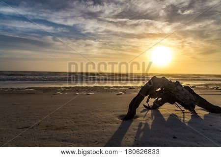 A large section of driftwood shares the sunrise at Amelia Island Florida.
