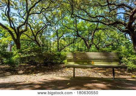 A wood bench under the live oaks in Pulaski Square in the Historic District of Savannah Georgia.