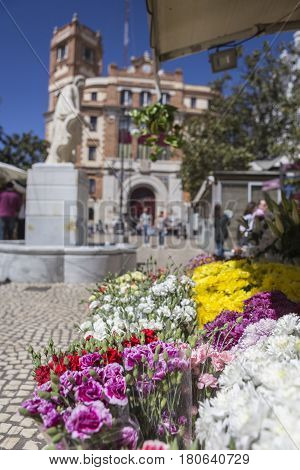 Cadiz flower market (Plaza de las Flores aka Plaza de Topete) with statue and main Post Office behind take in Cadiz Andalusia Spain