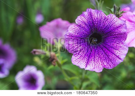 background nature Flower. Garden flowers. Bouquet Purple.