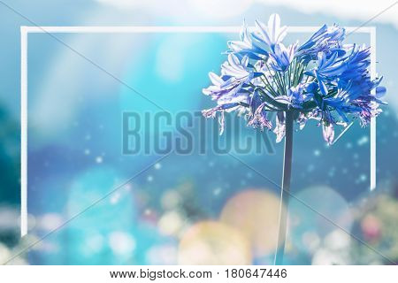 background nature Flower. Garden flowers. blue Flowers. Frame flowers