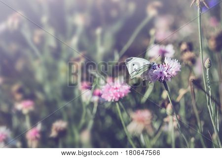 background nature Flower. Garden flowers. panicle flowers