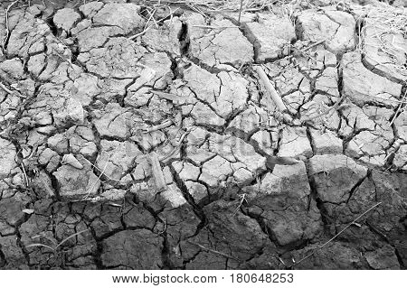 Arid Nature. Closeup Crack Soil Black And White Texture Background.