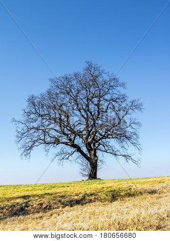 Spring Solitaire Tree On Horizon