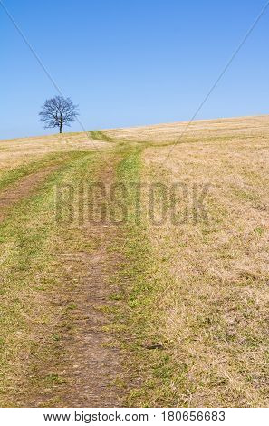 Spring Landscape With Meadow And Solitaire Tree