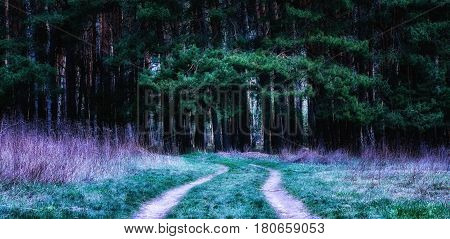 A magical coniferous forest beautiful and mysterious beckoning with its charm a trail entrance