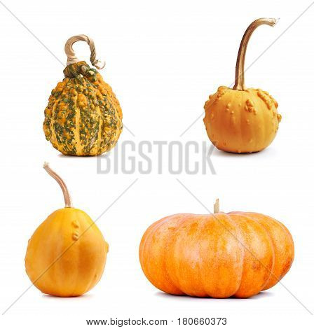 Set The Big Yellow Pumpkin On Isolated Background